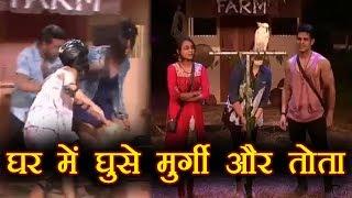 Bigg Boss 11: Hina Khan दौड़ी मुर्गी के पीछे तो Sapna Chaudhary ने की तोते से बात | FilmiBeat
