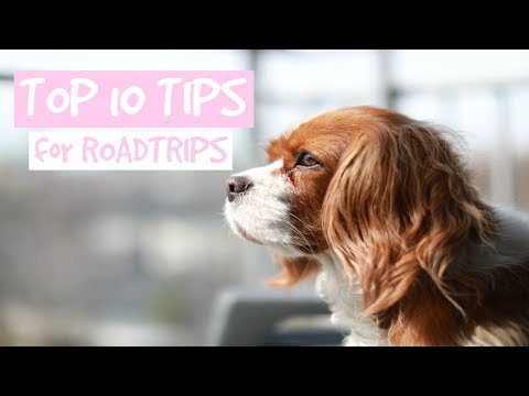 TOP 10 TIPS FOR ROADTRIPS WITH YOUR DOG | How to prepare