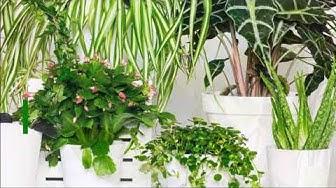 5 vinkkiä huonekasvien hoitoon talvella