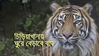 বদলে যাচ্ছে মিরপুরের জাতীয় চিড়িয়াখানা | bdnews24.com