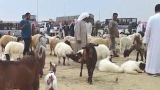 القطيف : سوق الغنم