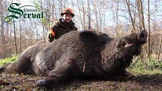 Wild Boar Hunting in Croatia - part5, Kroatische Keiler 3 - Drückjagd, Shasse au sanglier