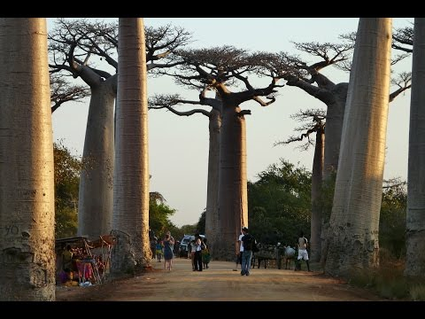 MyWay.Madagascar.2014.04.Antsirabe-Morondava