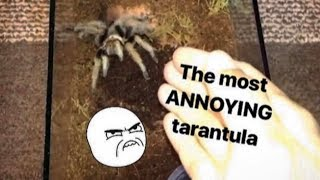 This TARANTULA is SO ANNOYING !!! (but for a creative reason)