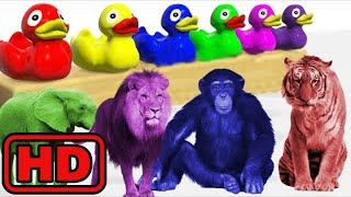 Kid -Kids -Learn ZOO Animals Names & Sounds For Kids - Learn Shapes And Colors With Rubbers Ducky