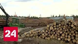 Лесорубов больше не обмануть: Россия взяла под контроль добычу древесины