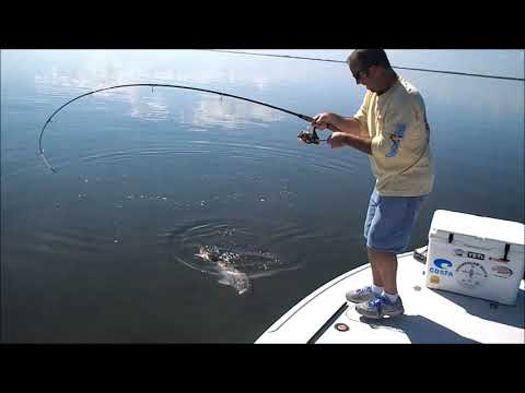 Bull Redfish Mosquito Lagoon With Tug of War Charters