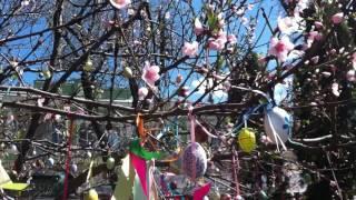 Пасхальное дерево - Easter tree