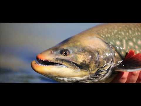 Fly Fishing In Greenland For Searun Arctic Char - Kangia River Lodge