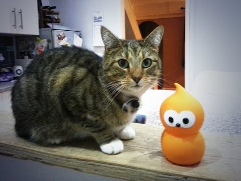 Zingy (EDF Energy) visits Button (the cat)