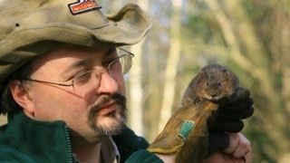 water vole reintroduction 2012