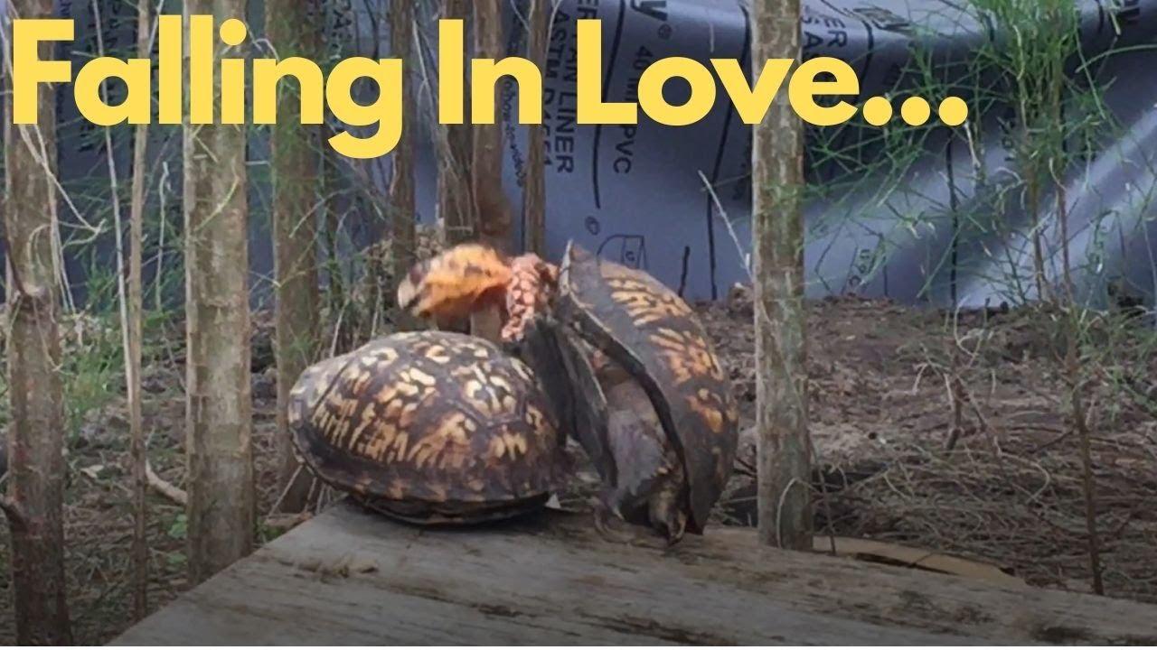 Turtle Mating Fail