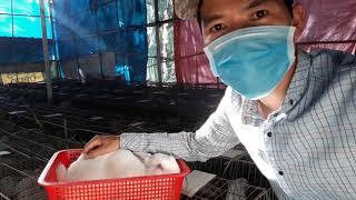 Tại sao Thỏ nái đang nuôi c๐n chết đột ngôt, nguyên nhân và cách điều trị.0937821512