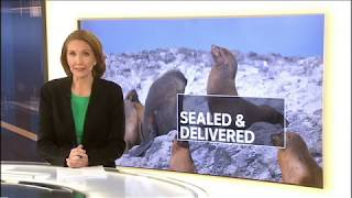 Seal Relocations - ABC News 2017