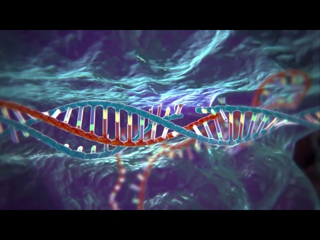 CRISPR-Cas, il kit
