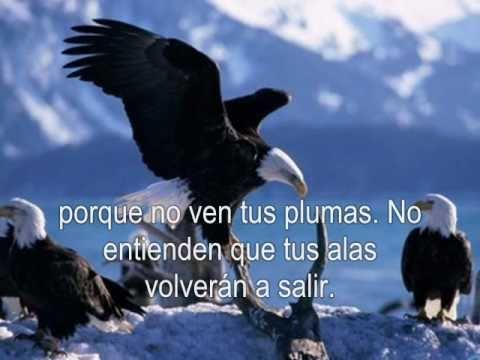 Vuela Águila. Tercer Cielo