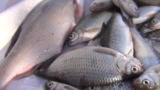 Підлідна риболовля на Тасоткеле, лютий 2017