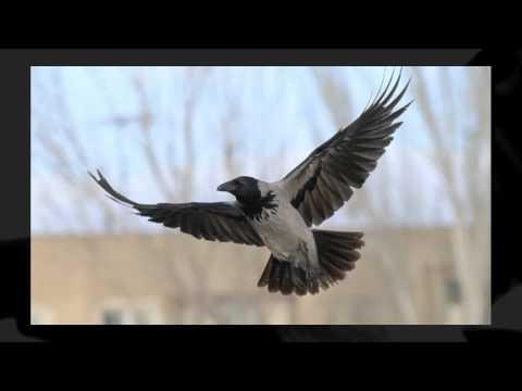 Птицы Фото Юрия Докукина.wmv