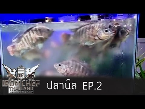 Iron Chef Thailand - Battle Nile Tilapia (ปลานิล) 2