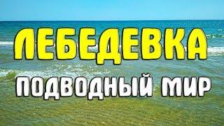 Лебедевка. Татарбунарский район. Подводный мир. 2018