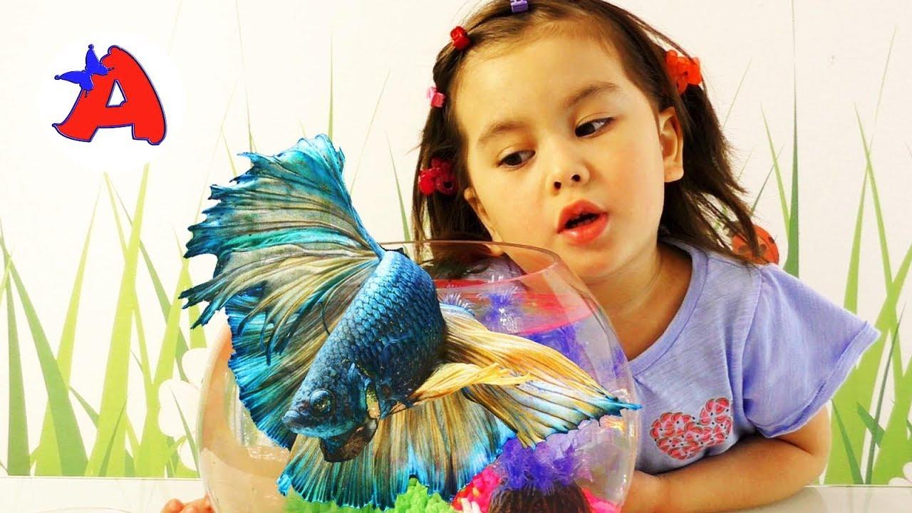 Рыбка петушок питомец Ангелы в новом аквариуме - YouTube