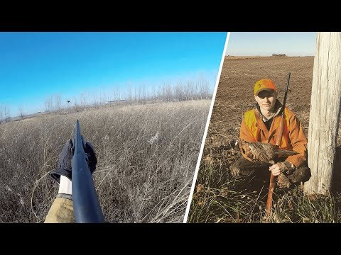 Indiana Pheasant Hunting 2017 - Pheasant Hunting Wild Birds Without Dogs