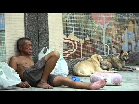 street videography stray dogs and homeless man ( LUMIX GH2) short film