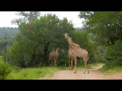 Impressie Kruger Park en Panoramaroute