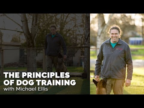 Michael Ellis Dog Training Videos