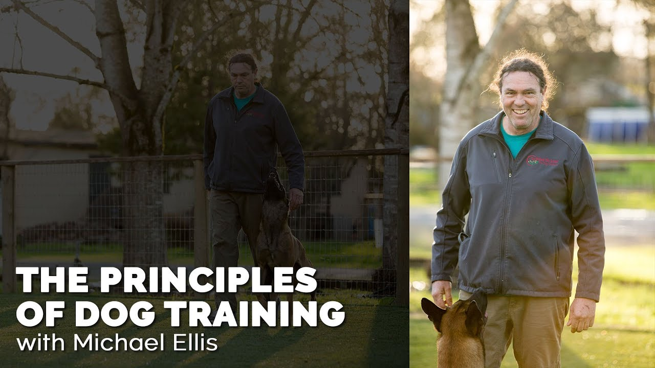 The Principles Of Dog Training With Michael Ellis Youtube