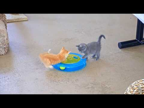 What could be cuter than ADORABLE Kittens playing?