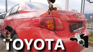 Toyota Corolla (Тойота Королла) У кого тойота головного мозга?