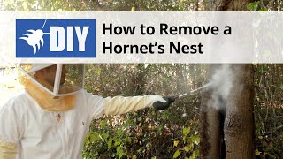 How to Get Rid of Wasps & Hornets (Nest Removal)
