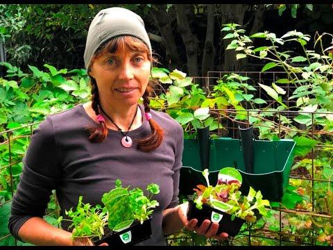 Vertical Planter Vegetables For Melbourne's Winter