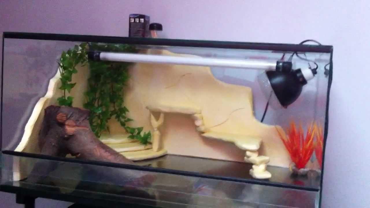 decor de fond terrarium pour pogona