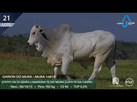 LOTE 21