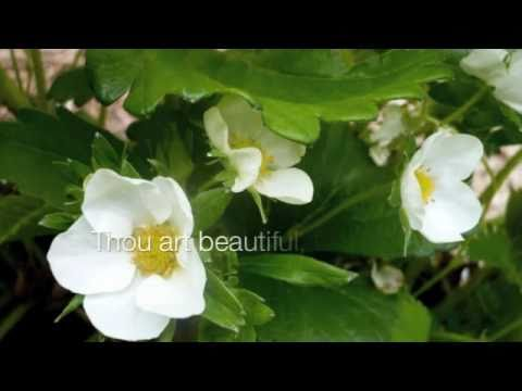 Christian Musicals: Song of Solomon (Song of Songs)