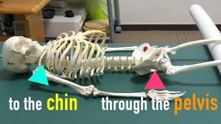 Introduction to a Feldenkrais Lesson -The whole body-