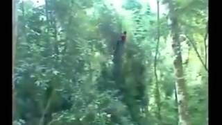 crazy bangali in jungle