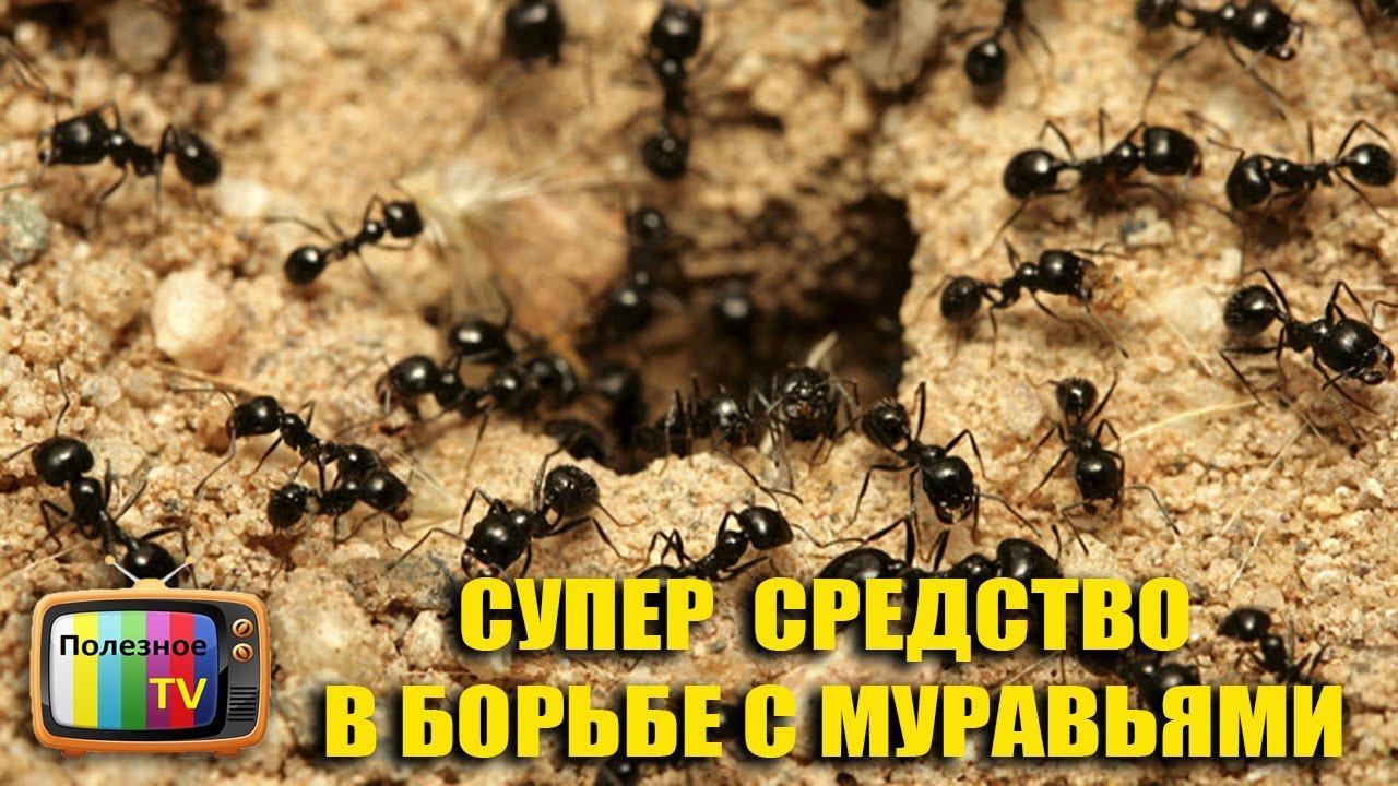 Как своими руками сделать муравейник для сада фото 199