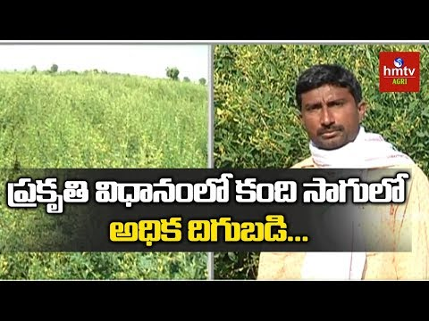 More Yield in ZBNF | Red Gram Cultivation In Natural Farming | hmtv Agri