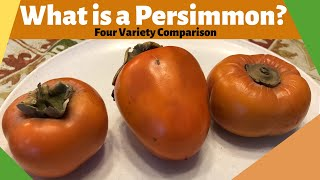 What is a Persimmon?| Four Variety Comparison