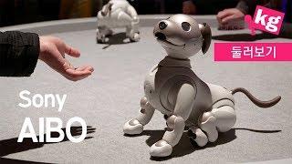 개를 닮은 소니 로봇 아이보 [CES 2019][4K]