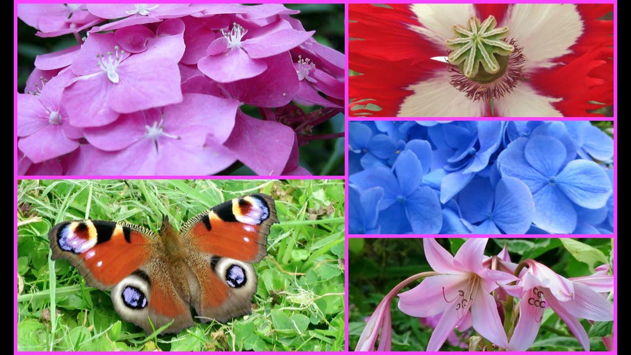 my summer garden flowers butterflies bees birds and my kitty