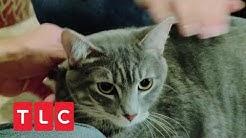 Dexter, die Killer-Katze | Der Katzenflüsterer | TLC Deutschland