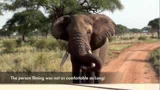 Close encounter with a huge elephant male