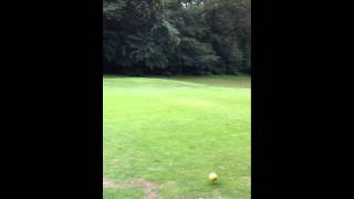Renard au Golf - Golfing Fox.MOV