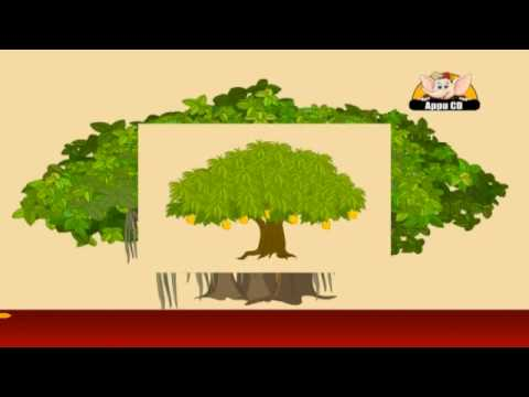 What You Can Do to Care For Trees - Tree Trust
