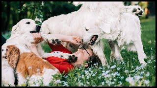 "GOLDENHAPPINESS - ""Time For Love FCI"" Domowa hodowla psów rasy Golden Retriver"