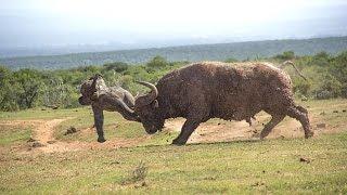 En Çok İnsan Öldüren 13 Hayvan Türü